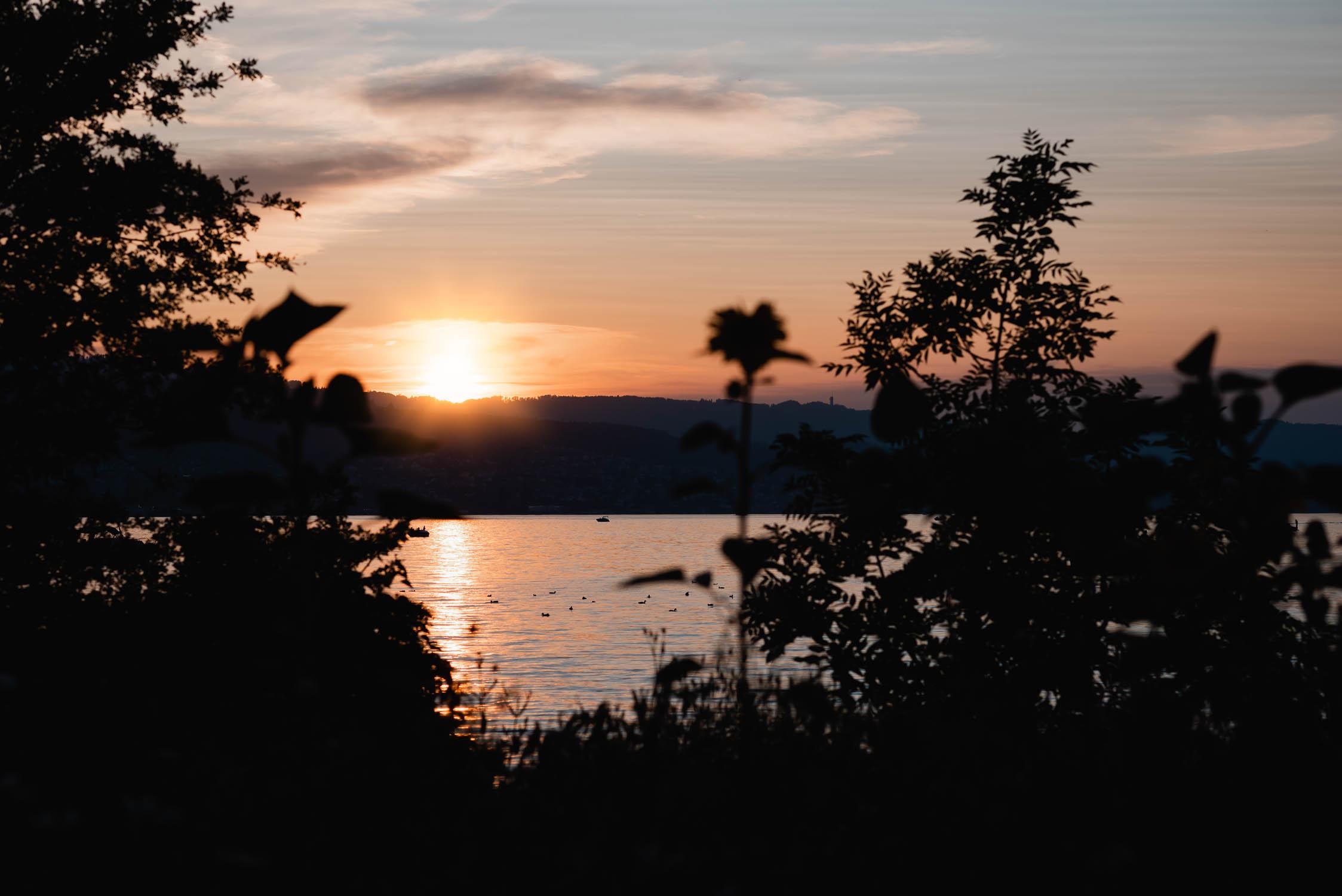 Sonnenuntergang auf der Halbinsel Au mit Blick auf den Zürichsee